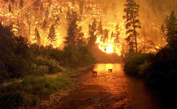 Conflagration in California, June, 2008