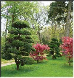Источник Жизни» Редкие и удивительные растения, огромные плоды и урожаи