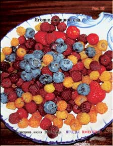 Different berries on one plate