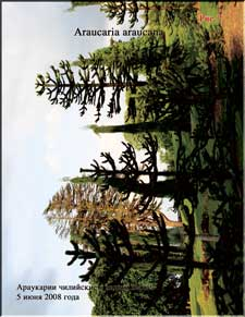 Араукария растёт в известняке
