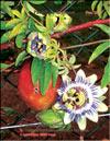 Пассифлора – Passiflora Sayonara