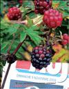 Ежевика – Rubus Caesius