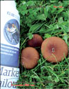 Королевский гриб (чёрный шампиньон) – Agaricus Black