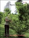 Magnolia «Betty»