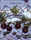 Плоды Passiflora Sayonara
