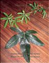Листья Passiflora Sayonara