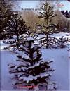 Обезьянье дерево – Araucaria araucana