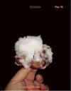 Японский гриб шитаки – Shiitake