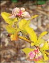 Whortleberries � Vaccinium myrtilus L.