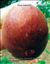 Huge �Bloody� figs
