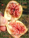 Huge �Bloody� figs in 2008