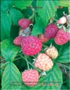 Red raspberry (Rubus daeus)