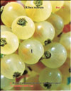 White currant (Ribes rubrum)