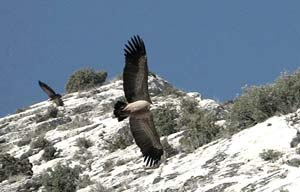 The eagles of Montsegur